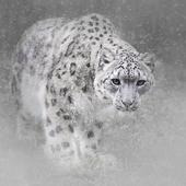 Snow Leopard Hd Wallpaper Update Version History For Android
