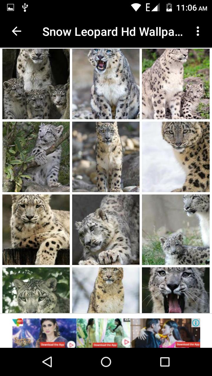 Snow Leopard Hd Wallpaper For Android Apk Download