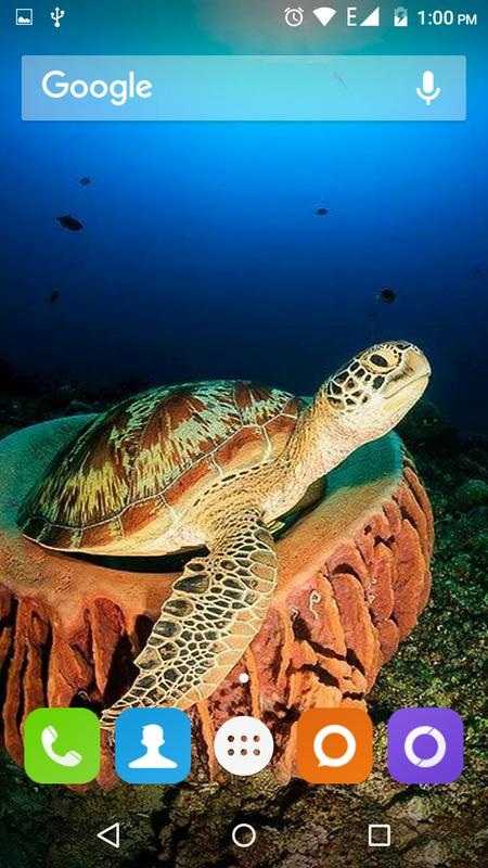 Turtle Wallpapers Hd For Android Apk Download