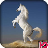 White Horse Hd Wallpapers icon