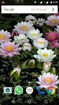 Water Lilies Flower Wallpaper screenshot 7