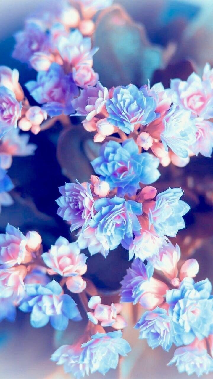 Flower Wallpapers For Android Apk Download