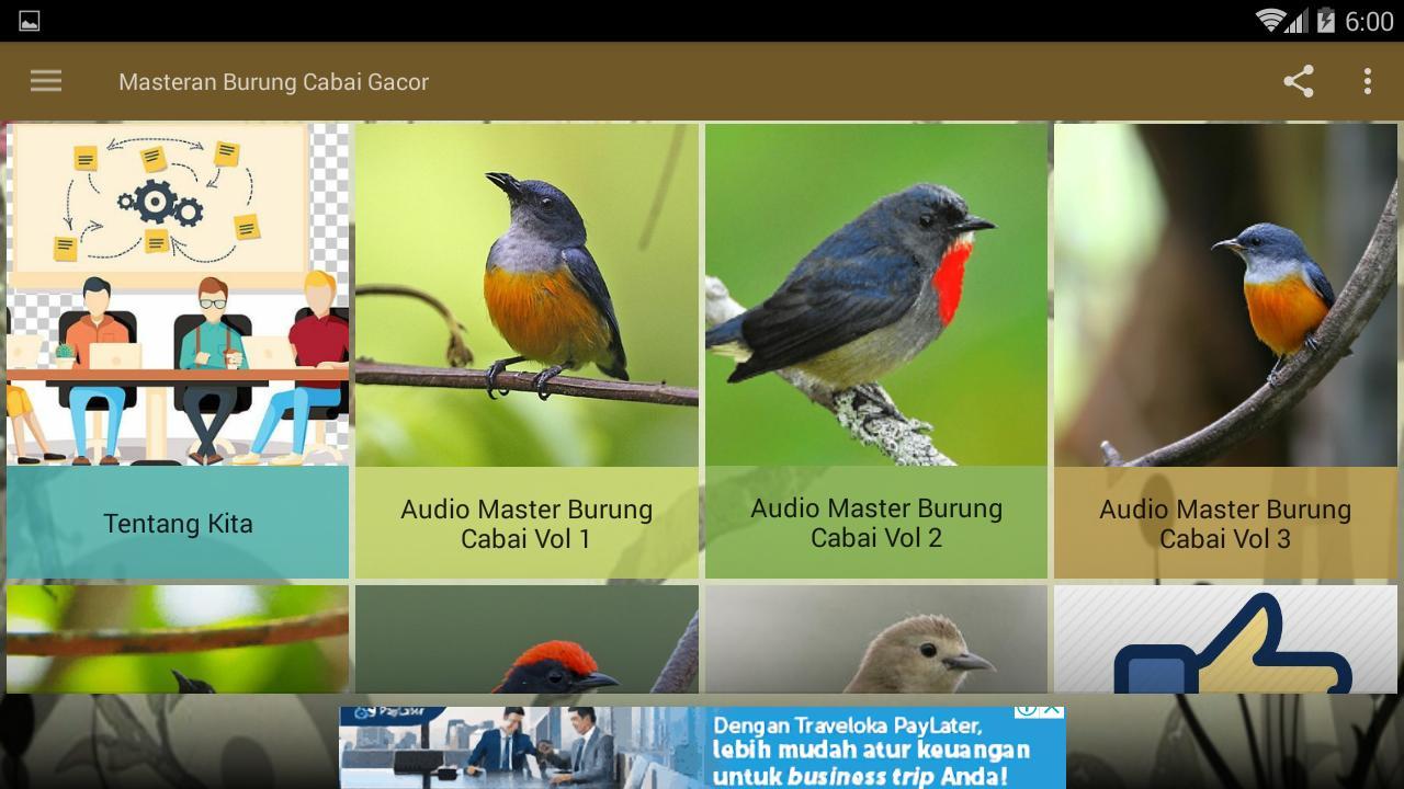 Masteran Burung Cabai Gacor For Android Apk Download