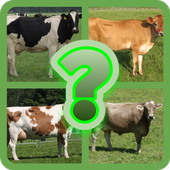 Guess Little Cattle icon