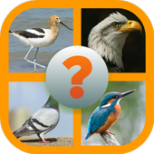 Guess Little Bird icon