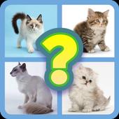 Guess Little Kitten icon