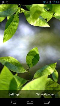 Fresh Leaves Poster