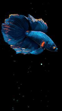 Betta Fish Live Wallpaper FREE स्क्रीनशॉट 14