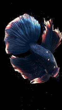 Betta Fish Live Wallpaper FREE स्क्रीनशॉट 18