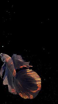 Betta Fish Live Wallpaper FREE स्क्रीनशॉट 19