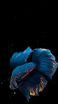 Betta Fish Live Wallpaper FREE स्क्रीनशॉट 1