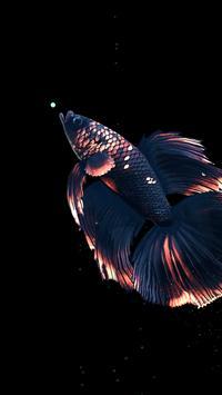Betta Fish Live Wallpaper FREE स्क्रीनशॉट 20