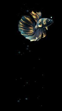 Betta Fish Live Wallpaper FREE स्क्रीनशॉट 22