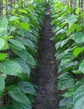 cultivation of medicinal plants screenshot 14