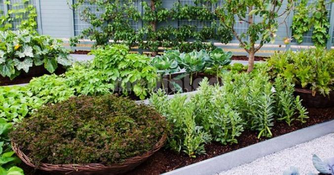 cultivation of medicinal plants screenshot 4