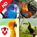 100 Bird sounds : Ringtones, Wallpapers