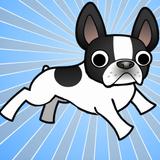 French Bulldog World