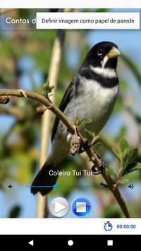 Cantos de Coleiros screenshot 5