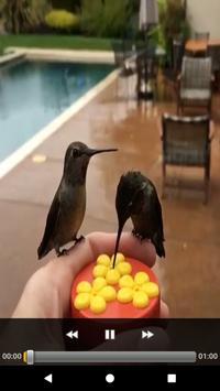 Brazilian's birds sounds screenshot 11
