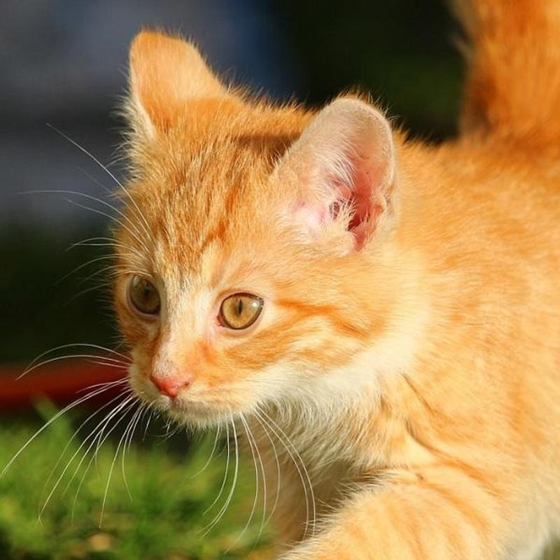 Gatos Bonitos For Android Apk Download