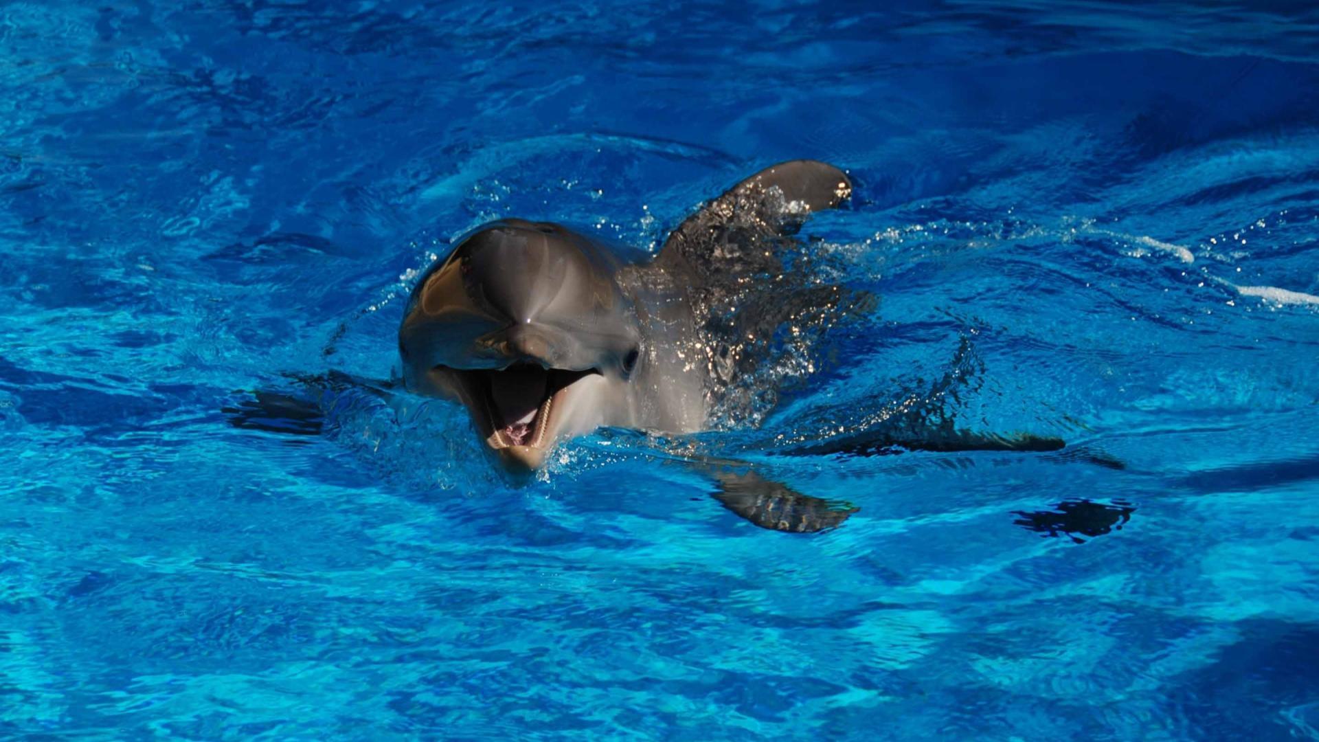 фото дельфинов для рабочего стола неприятно становится