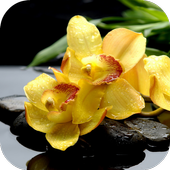 Yellow Orchids Live Wallpaper icon