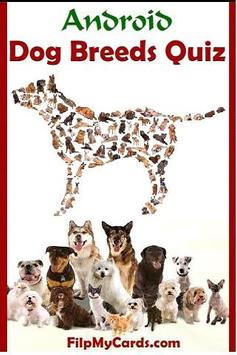 Dog Breed Picture Quiz poster