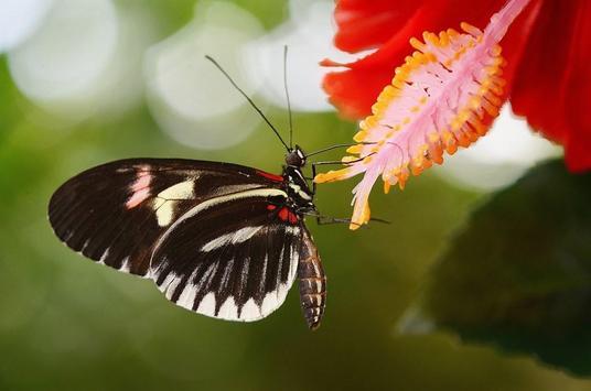 Butterfly wallpapers screenshot 8