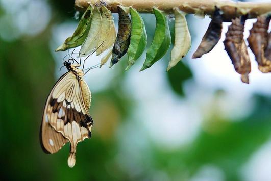 Butterfly wallpapers screenshot 9