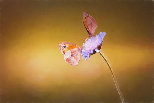 Butterfly wallpapers screenshot 12