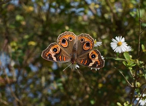 Butterfly wallpapers screenshot 14