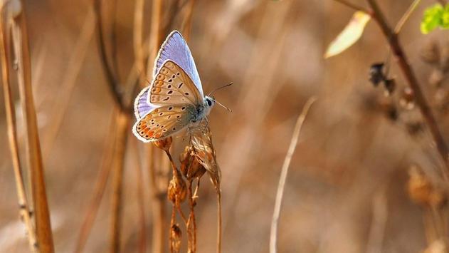 Butterfly wallpapers screenshot 15