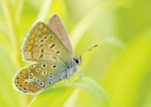 Butterfly wallpapers screenshot 2
