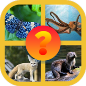 Animal guessing icon