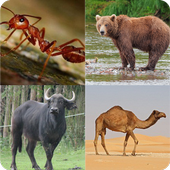 Guess The Animals icon
