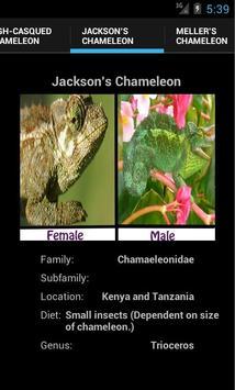 Chameleons screenshot 3