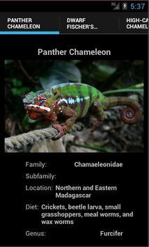 Chameleons poster