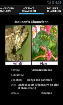 Chameleons screenshot 1