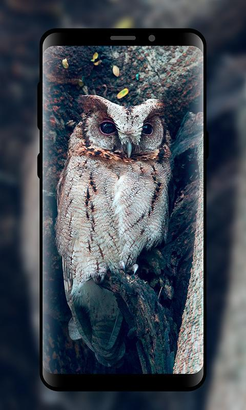 HQ Night Owl Wallpapers HD for Android - APK Download