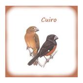 Canto De Curio icon