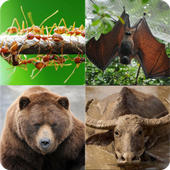 Guess 45 Animal Name icon