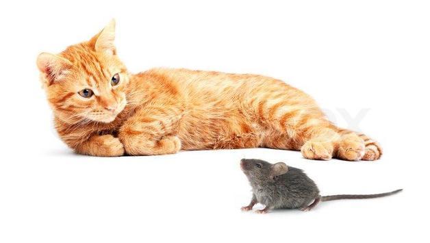 Tom and Mouse Cartoons screenshot 3