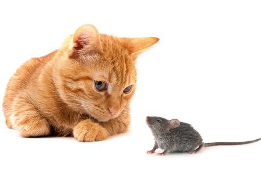 Tom and Mouse Cartoons screenshot 5