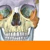 Sobotta Anatomy 图标