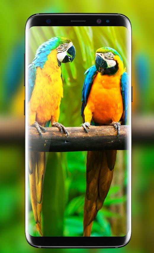 Parrot Live Wallpaper Hd Birds Live Wallpapers For Android Apk Download