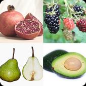 Name That Fruit Quiz icon