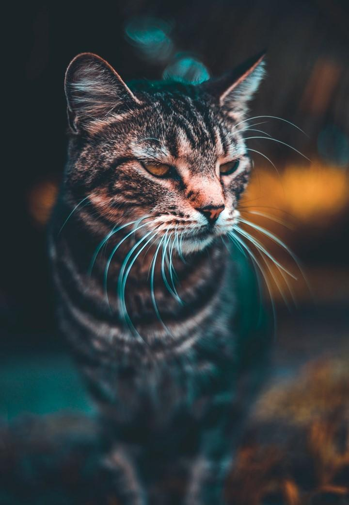 Cute Cats Wallpaper Hd For Android Apk Download