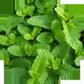 طب الأعشاب و فوائد الأعشاب
