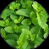 طب الأعشاب و فوائد الأعشاب ícone