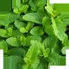 Icona طب الأعشاب و فوائد الأعشاب
